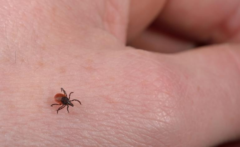 Upclose view of hand and deer tick