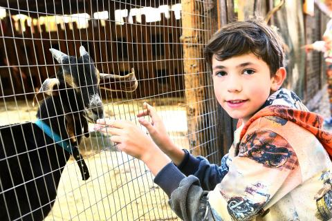 A child standing by a fence with a goat inside.