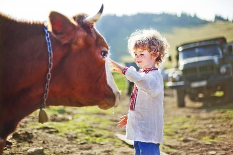 A child petted a cow outside.