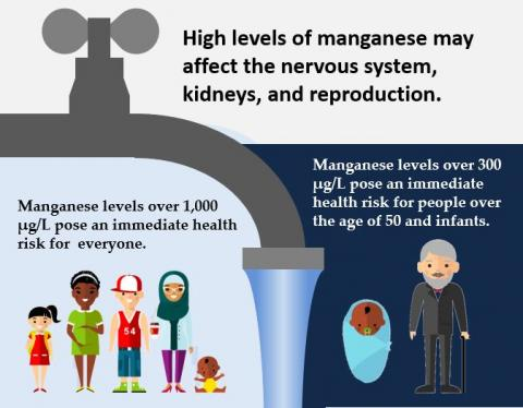 High levels of manganese may affect the nervous system, kidneys, and reproduction