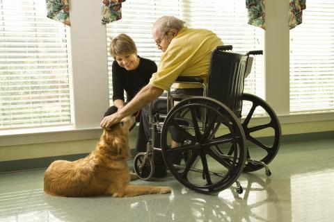 An adult pets a sitting therapy dog.